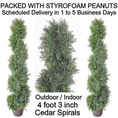 SPJPLANTS Two Artificial Outdoor Indoor Potted 4 foot 3 inch Cedar Spiral Topiary Tree Plants packed with styrofoam peanuts SPJPLANTS http://www.amazon.com/dp/B0097KZNR4/ref=cm_sw_r_pi_dp_nj5cub1WKYMYF