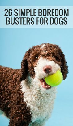 Check out our list of 26 quick and simple ways to relieve dog boredom!