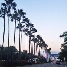 @Aimee Lemondée Gillespie Song shows us the beauty of #LA.