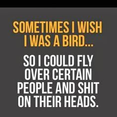 I really wish I could be a bird some days