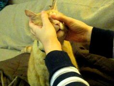 Cat massage helps change bad behavior.