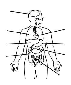 Human Body Diagram Printable