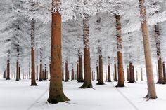 White Forest - Fototapeter