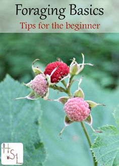 Get ready to harvest dinner and fill the medicine cabinet from the wild earth and the backyard with these foraging basics.