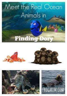 Meet the real ocean animals in Finding Dory, a fun movie for the whole family whose protagonists are based on actual science. Animal behavior facts, ocean habitats science and real marine biology used creating the movie's characters. Great for homeschooling and educational camps on the ocean and ocean conservation.