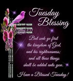 Tuesday Blessing .