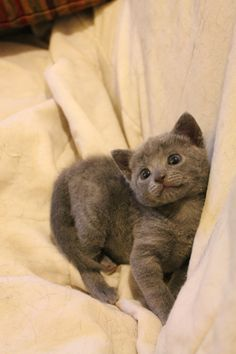 Hi! Let's start with this cute grey kitty who wants you to have a beautiful day.
