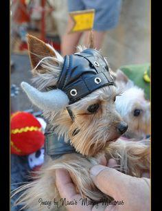 Viking Yorkie