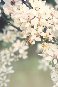 Spring Was In The Air | Flickr - Photo Sharing!