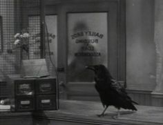 Jimmy the Raven. He was in You Can't Take It With You, It's A Wonderful Life, Arsenic And Old Lace, The Wizard Of Oz and many more.