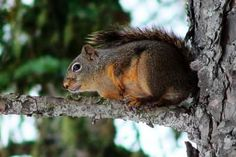 How To Make Homemade Squirrel Repellent