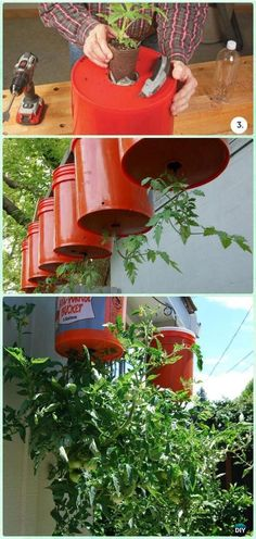 Grow Tomato Upside Down in Bucket Instructions - Gardening Tips to Grow Tomatoes. - Grow Tomato Upside Down in Bucket Instructions – Gardening Tips to Grow Tomatoes In Containers - Tips For Growing Tomatoes, Growing Tomato Plants, Growing Tomatoes In Containers, Grow Tomatoes, Growing Veggies, Bucket Gardening, Hydroponic Gardening, Container Gardening, Gardening Hacks
