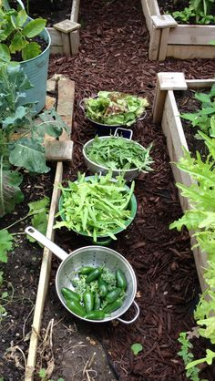 Keep some old pans and buckets in your garden whilst harvesting vegetable or fruit as handy containers for the harvested crops.
