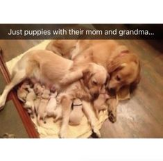 Picture memes — iFunny Just puppies with their mom and grandma. – popular memes on the s Cute Little Animals, Cute Funny Animals, Funny Dogs, Funny Animal Pictures, Cute Pictures, Cute Dogs And Puppies, Doggies, Cute Stories, Tier Fotos