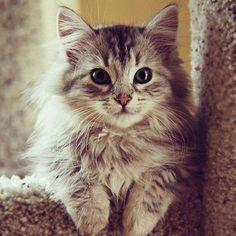 Lovely feline ~
