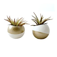 Carat Air Plant Cups - Set of 2