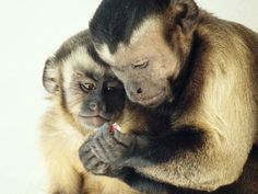 Frans de Waal: Moral behavior in animals | Video on TED.com