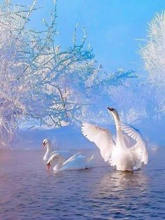You are in the right place about animal wallpaper vintage Here we offer you the most beautiful pictu Beautiful Swan, Beautiful Birds, Beautiful Pictures, Cross Paintings, Living Room Pictures, Animal Wallpaper, Cellphone Wallpaper, Colorful Birds, Belle Photo