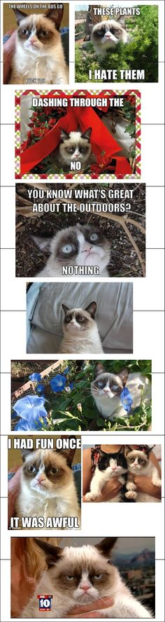 This Grumpy Cat kills me! It's Nick's doppleganger