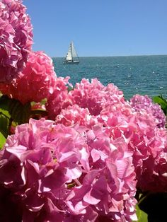 French Heart by the Sea~: Cape Cod Recipes for Jackie Kennedy's 84th Birthda...