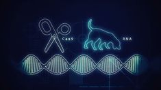 CRISPR can be tough to describe, let alone visualize. This powerful gene-editing technique has the potential to change our lives. Biology Lessons, Medical Research, Genetics, Dna, It Works, Tech, Neon Signs, Change, Space