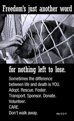 Please do something to help them. Adopt. Foster Rescue Transport Neuter Spay and if you can't do this - DONATE!