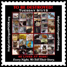 TO BE DESTROYED  09/01/15 - - Info  TO BE DESTROYED -  Click for info & Current Status: http://nyccats.urgentpodr.org/montage-071215/