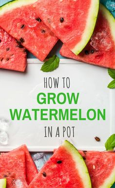 How-To-Grow-Watermelon-In-A-Pot