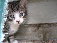 Bright eyed, cute lil' kitty