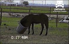 equestrianxbitch: fucking horses so majestic