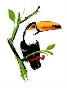 """Tucan"". Graphite, ink and Digital Color. Art of Ferran Casals. Paintings & Illustrations. www.ferrancasals.com"