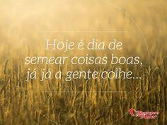 Bom dia! Hoje é dia de semear coisas boas, já já a gente colhe. #bomdia #dia #hoje #semear #semente #coisa #novo #frases #mensagenscomamor