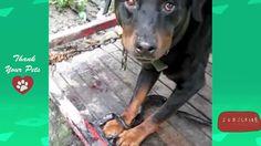 See all playlist about dogs here https://www.youtube.com/playlist?list=PL03-l_F12aWTiDs5XXTel9GL5sd_8kMhv  Thank your for watching. Please Subscribe us at https://www.youtube.com/user/Mirianpamu97039/about follow us on: Facebook: http://ift.tt/2dzQEaJ https://twitter.com/ZeiglerLydia http://ift.tt/2d9Qclq http://ift.tt/2dzQujG