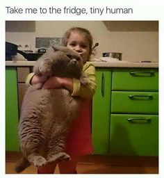 Take me to the fridge, tiny human.