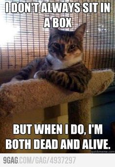 Animal Memes: The Most Interesting Cat in the World - Right In Your Face - World's largest collection of cat memes and other animals I Love Cats, Cute Cats, Funny Cats, Funny Animals, Cute Animals, Silly Cats, Funniest Animals, Bad Cats, Pretty Cats