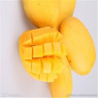 200g African Mango seed P.E. (Natural Fresh fruit Powder)