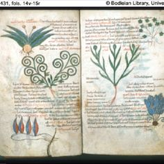 A page from the real Ashmole 782 - actually that kind of looks like the Voynich Manuscript.