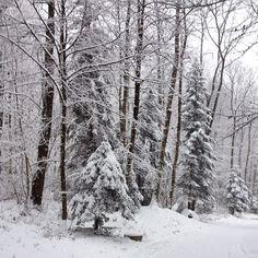 walking in a winter wonderland - Zürich