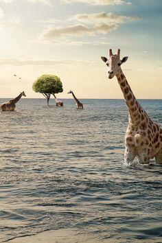 Dream imagination surrealism Wading Giraffes by Eric Doggett