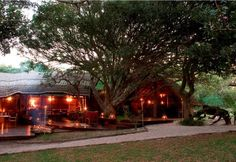 Situated in Kosi Bay Nature Reserve, the 16 bedded luxury Kosi Forest Lodge allows guests the unique opportunity of canoeing the Kosi Lake system. Nature Reserve, Holiday Destinations, Canoe, Lodges, South Africa, Trip Advisor, Coastal, Places To Visit, House Styles