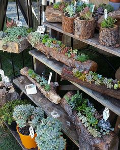 The Succulent Guy at the Byron Bay Beachside Market - Easter Saturday.