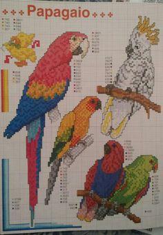 Aves - Papagaio