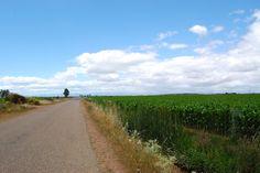 スペイン巡礼の道(カミーノ・デ・サンティアゴ)------まさにカントリーロード。歩いてみたいな。