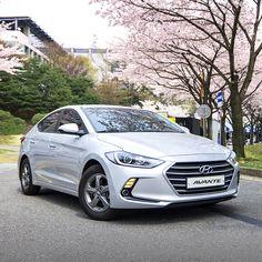 역동적이면서도 고급스러운 #디자인 의 #현대자동차 #아반떼 가 선사하는 즐거운 #드라이빙 !  #Hyundai #Motor #AVANTE ( #Elantra ) with #dynamic and #classy #design presents the #pleasant #driving !  #car #cherryblossom #spring #grill #travelling #photooftheday #instadaily #라디에이터 #명지대 #벚꽃 #봄 #드라이브 #여행 #자동차 #일상 #자동차그램 #영현대