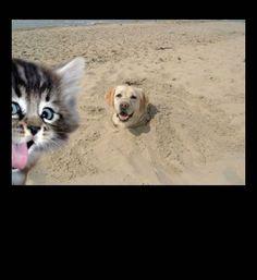 cat photobombing dog in sand