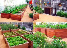 まちコミ菜園