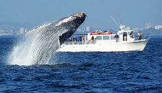 San Juan Safaris-Whale Watching. Make memories while observing the beautiful wildlife of the Pacific Northwest!