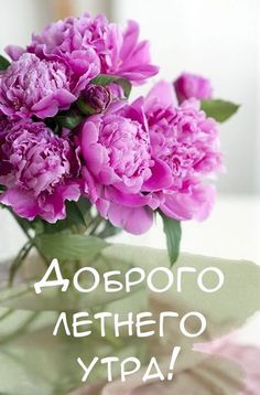 Spanish Jokes, Morning Greeting, Day Wishes, Peonies, Good Morning, Rose, Flowers, Inspiration, Places
