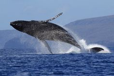 I want to go back to Maui and see the whale migration :-)