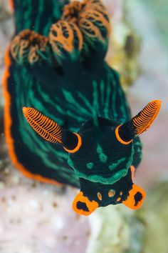 Underwater World Cores da natureza Nature & Travel Beautiful Sea Creatures, Deep Sea Creatures, Animals Beautiful, Underwater Creatures, Underwater Life, Sea Snail, Sea Slug, Water Animals, Sea And Ocean